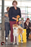 Bremen Int. Dogshow 02-08-2014 first place Youth-Class second Youth-CAC VDH/AC